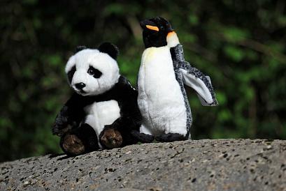 Google рассказал о различиях между Panda и Penguin